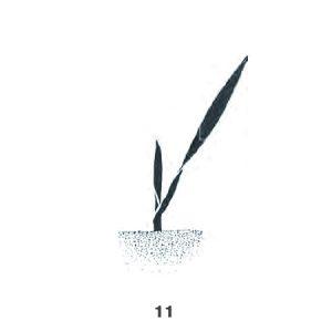 1. Laubblatt entfaltet, Spitze des 2. Blattes sichtbar