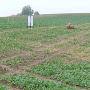 Feldtag Bodenbearbeitung 2015