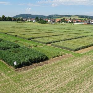 Pflanzenbauliches Versuchswesen am Eichhof