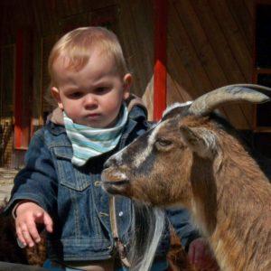Tiere gehören zu einem Urlaub auf dem Bauernhof