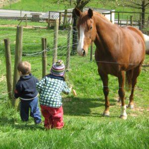 Für einen Urlaub auf dem Bauernhof sind Tiere unerläßlich