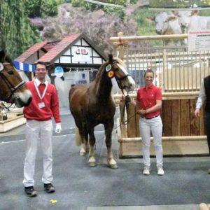 Gute Laune beim Kaltblut-Team aus Hessen mit Elaya, Waleria und Landmesser (von links)