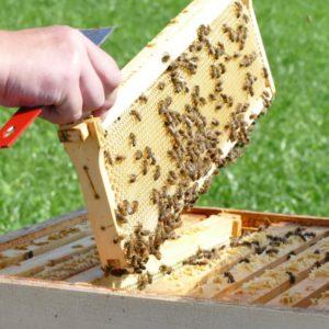 Das Bieneninstitut stellte die Bedeutung von Bienen für die Ökologie dar.