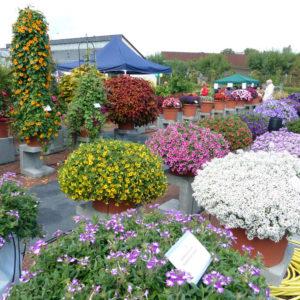 Prächtige Sommerblumen im torffreien Substrat
