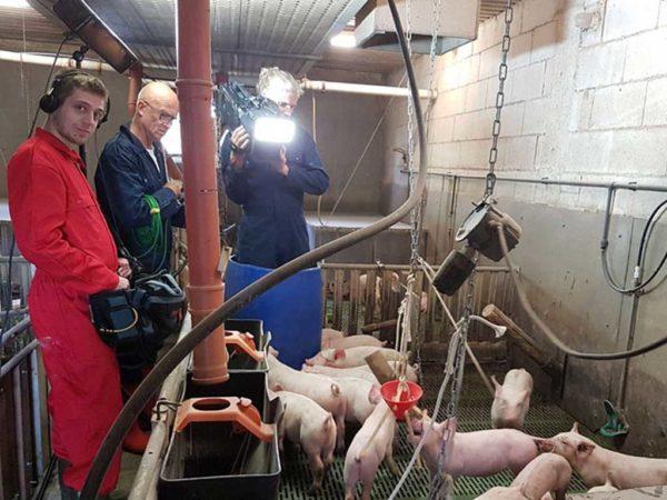 Filmaufnahmen im Schweinestall; Foto: BLE (Bundesministerium für Landwirtschaft und Ernährung)