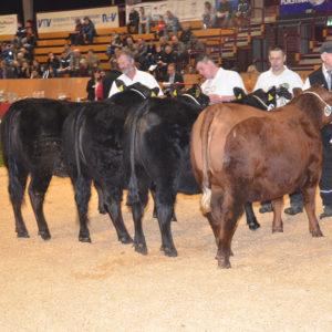 Exzellente Angus-Rinder wurden in Alsfeld zeigt, vorn die Siegerin Elster im Besitz von Werner Rücklinger, Eschenrod.