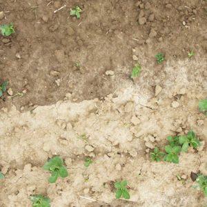 Abb. 3: Lückenhafter Feldaufgang