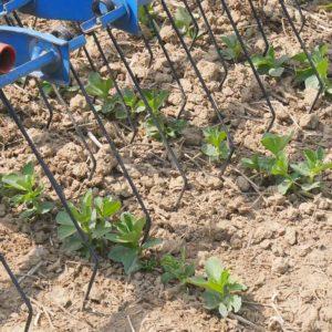 Der Hatzenbichler Striegel greift mit den Federzinken in die Erde ein und lockert den Boden auf.