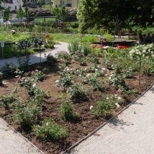 Das Rosenbeet im Beratungsgarten des Landes Hessen.