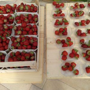 Präsentation Erdbeeren auf der LGS