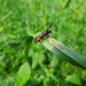 Nicht nur Bienen finden Ihren Lebensraum im hessischen Beratungsgarten. Vor Ort erfahren Sie, wie auch in Ihrem Garten die Biodiversität gesteigert werden kann.