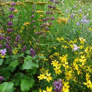 Aus aktuellem Anlass hinsichtlich des Insektensterbens möchten viele Menschen gegensteuern und das Umwelt- und Nahrungsangebot der Insekten verbessern. Im Beratungsgarten der Landesgartenschau erhalten Sie die passenden Tipps dazu.