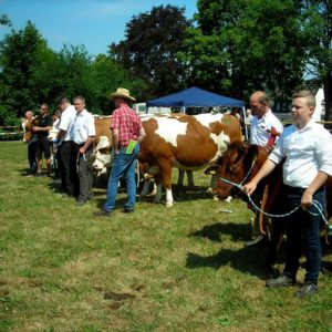 Die Siegertiere der Rassen Holsteins, Fleckvieh und Rotes Höhenvieh mit ihren Züchtern beim abschließenden Schaubild.