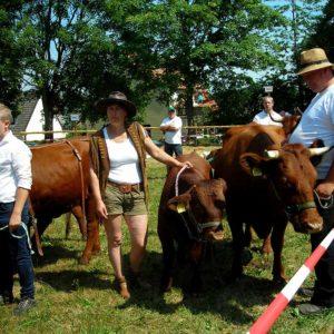 Das Rote Höhenvieh war bei der Schau mit Zuchtbullen, Jungrindern und Kühen mit Kalb bei Fuß vertreten.