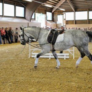 Pferd in Reithalle