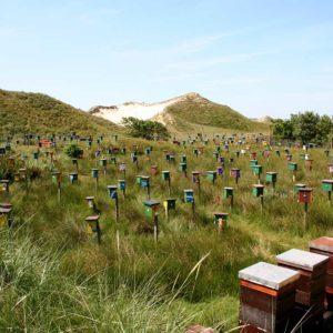 Bienenbelegstelle Norderney