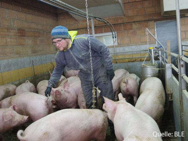 Volke_Schweine