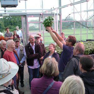 Präsentation von Topfbasilikum im Spezialübertopf mit Dochtbewässerung