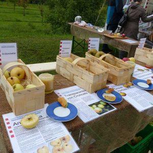 Bestimmung und Verkostung alter Apfelsorten