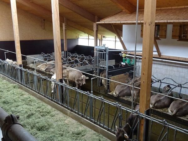 Milchviehstall des Biobetriebs Erlenhof