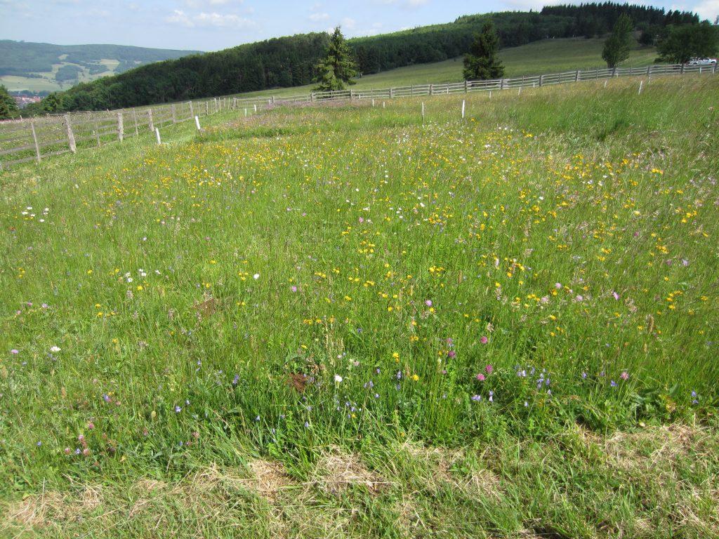 Versuch: Langfristwirkung von Landschaftspflegemaßnahmen auf Borstgrasrasen und Goldhaferwiesen