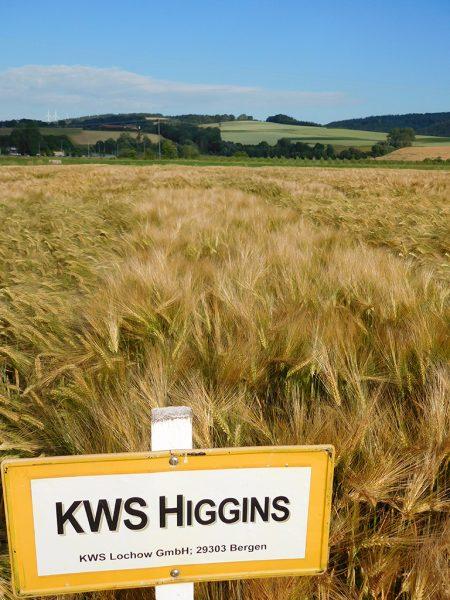Wintergerstensorte KWS Higgins
