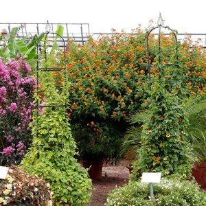 Viele Kübelpflanzen lassen sich einfach über den Winter bringen