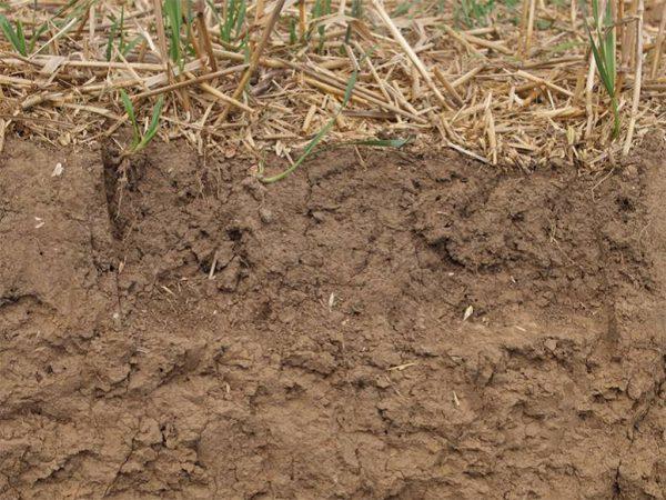 Das Bodenprofil zeigt ein anzustrebendes Bodengefüge