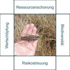 Grafik: Vorzüge von extensiven Getreidearten