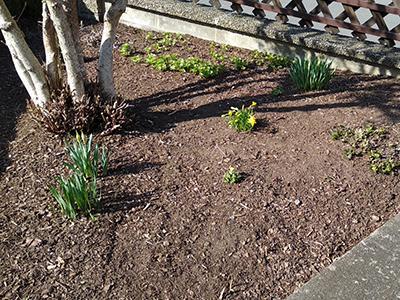 Aufgeräumtes Beet im zeitigen Frühjahr