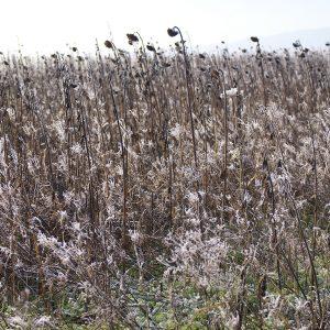 Blühfläche im Winter