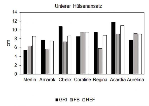 LSV Sojabohnen, Abbildung 2: Unterer Hülsenansatz