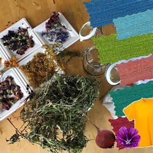 Schulkinder lernen, wie Farbstoffe aus getrockneten Pflanzen hergestellt werden können.