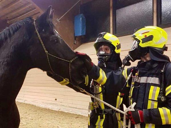 Zwei Feuerwehrleute mit Pferd