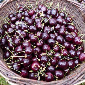 Ernte - ein langes Jahr der Hege und Pflege entlohnt nun endlich in den Monaten Juni und Juli mit den ersehnten Früchten