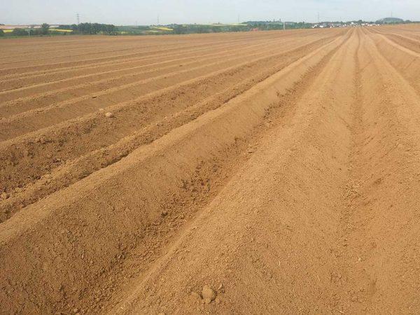 Abb. 5: Fertiggestellte Kartoffeldämme