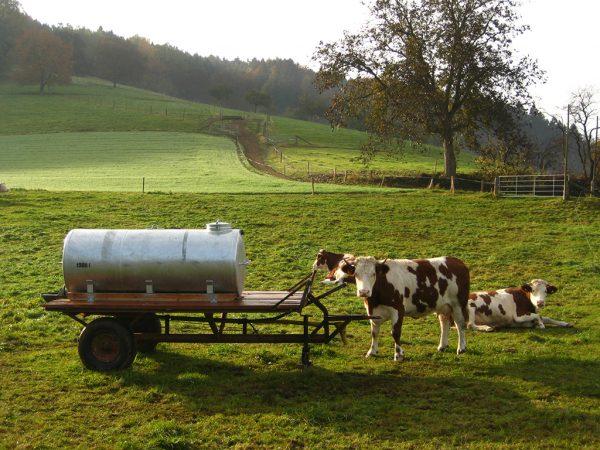 Zwei Kühe auf einer Weide mit Wasserfass