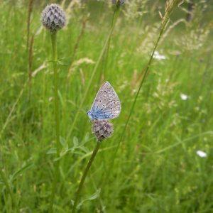 Schmetterling auf Wiese