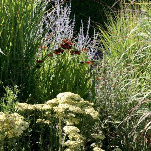 Kombination aus Schafgarbe, Sonnenbraut, Perovskie und Rutenhirse