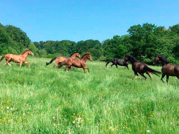 Pferde auf einer Weide im Sommer