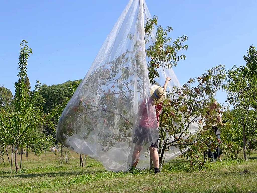Kirschennetz