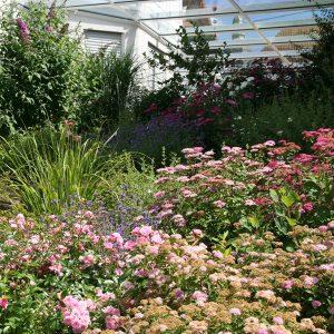 Bodendeckende Bepflanzung durch Kombination von Kleinsträuchern, wie Polsterspieren, roten Sommerspieren und Bodendeckerrosen