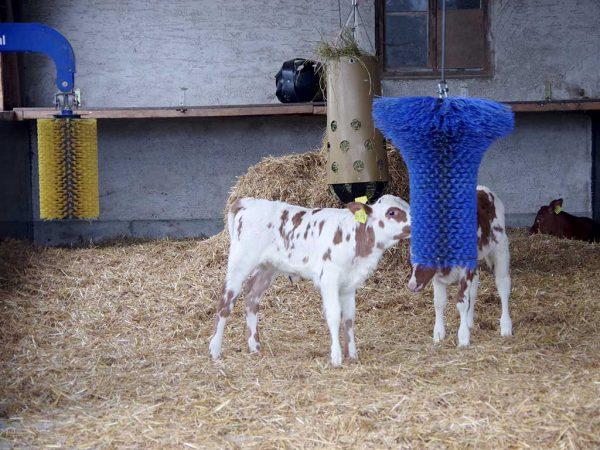Kälberbürsten werden gern von den Tieren angenommen. Sie können im Auslauf angebracht werden, aber auch im Stall steigern sie den Beschäftigungsgrad der Tiere.; Quelle (BLE)