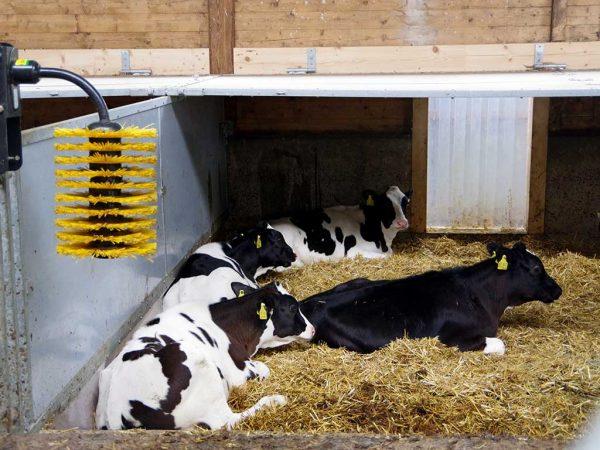 Eine bewegliche Abdeckplatte im hinteren Bereich des Stalls bietet eine zugluftfreie Rückzugsmöglichkeit; Quelle (BLE)