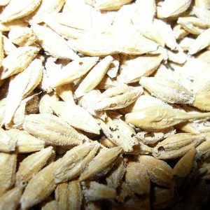 gelagerte Getreidekörner mit Kornkäferschaden