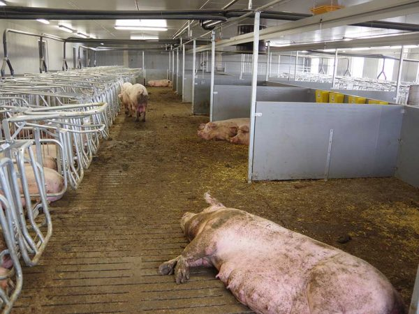 Abb. 1: Neubau eines Deckzentrums mit Gruppenhaltung (Betrieb 1); Foto: BLE (Bundesanstalt für Landwirtschaft und Ernährung)