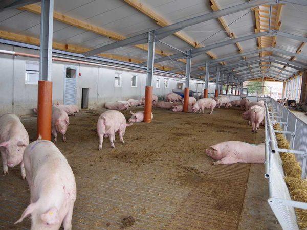 Abb. 2: Anbau eines Auslaufes am Wartestall (Betrieb 3); Foto: BLE (Bundesanstalt für Landwirtschaft und Ernährung)