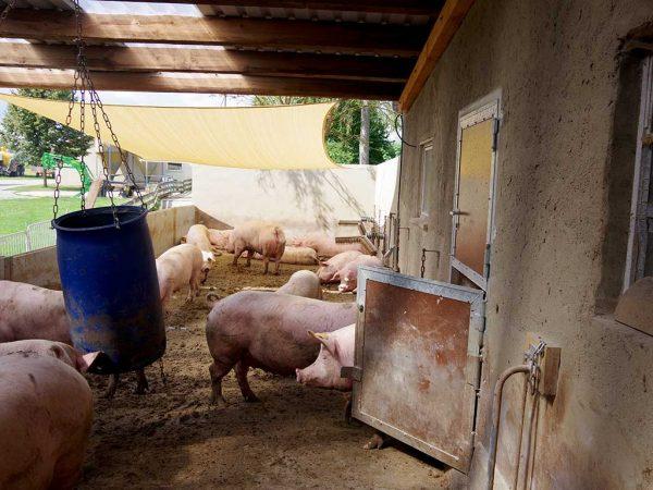 Abb. 5: An das neue Warteabteil angeschlossener Auslauf (Betrieb 4); Foto: BLE (Bundesanstalt für Landwirtschaft und Ernährung)