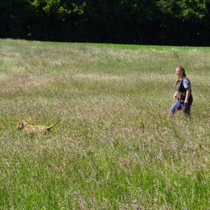Suche mit dem Vorstehhund; Foto: Jasmin Imhäuser