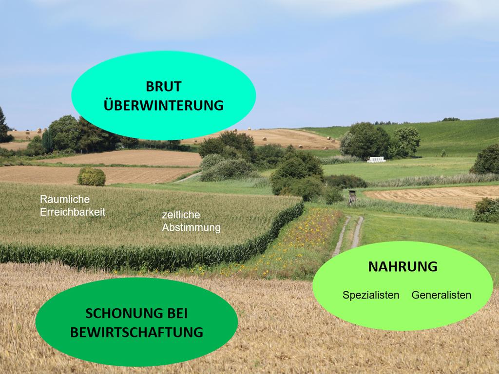 SCHEMA: Faktoren zum Erhalt wildlebender Arten in der Agrarlandschaft